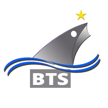 bts logo web